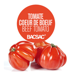 Papier ensemencé, tomates coeur de boeuf